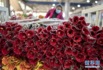 亚洲最大鲜切花交易市场逐步恢复正常营业